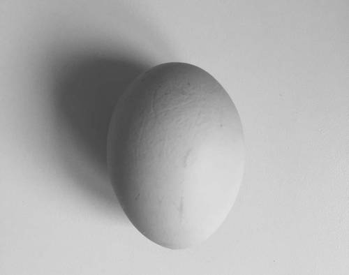 A Brief History of the Egg Box